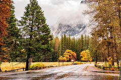 Wet road in Yosemite at cloudy autumn morning. Wet road in Yosemite National Park Valley at cloudy autumn morning. Low clouds lay in the valley. California, USA Royalty Free Stock Photos
