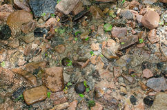 Wet rocks. Wet stones and sand on the ground near a small stream Stock Photo