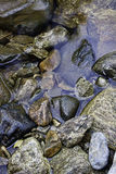 Wet rocks in the stream. The wet rocks to the side of a small stream Royalty Free Stock Photography