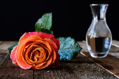 Wet rose on a wooden table. Wet rose on wooden table black background Royalty Free Stock Photo