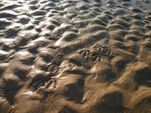 Wet sand. Sunlit wet sand surface with seagull footprints Royalty Free Stock Images