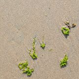 Wet sand on the beach. With algae and shells royalty free stock images