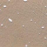 Wet sand on the beach. With algae and shells stock photos