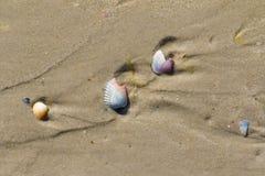 Wet sand beach with broken seashells at sun summer day Stock Photography