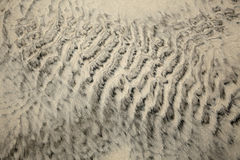 Wet Sand Abstract. Wet Sand on the beach at a stormy winter day. The different hues in the sand reveal the diversity of pattern left by the waves Royalty Free Stock Images