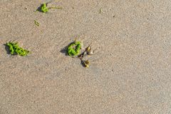 Wet sand on the beach. With algae and shells stock images