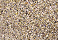 Wet sand with crushed sea shells Stock Images