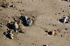 Wet sand with pebbles. Wet sand from the tide just going out with a sprinkling of large and small pebbles Royalty Free Stock Photos