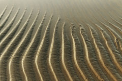 Wet sand. Stock Images