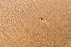 Wet sand texture Royalty Free Stock Photos