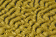 Wet sand wave pattern Royalty Free Stock Photography
