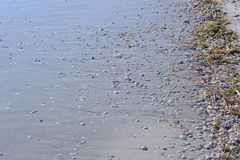 Wet Sandy Beach. A sandy beach with algae, pebbles and fragmented seashells Royalty Free Stock Image