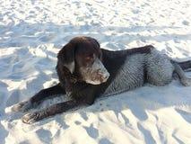 Wet sandy dog Stock Photos