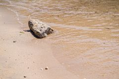 The wet sea sandy coast and separate stone Royalty Free Stock Photos
