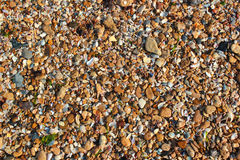Wet sea shells and small pebbles on a beach.  Stock Image