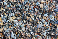 Wet sea shells and small pebbles on a beach.  Royalty Free Stock Photo