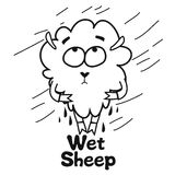 Wet sheep Royalty Free Stock Photography