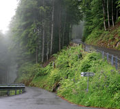 Wet shiny road in Swiss Alps in mist cold summer morning Stock Photos