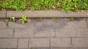 Wet sidewalk Stock Photography