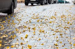 Wet sidewalk with yellow fallen leaves in autumn Royalty Free Stock Photos