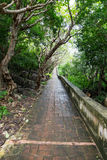 Wet and slippery brick path in tropical forest. Long footpath along trees Royalty Free Stock Images