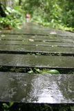 Wet and slippery wooden path. Hiking wooden path crossing the lake. Wet and slippery after raining day Stock Images