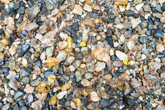 Wet Small Rocks and Fallen Leaves for Backgrounds Stock Photos