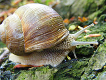 Wet snail in the Forest Stock Image
