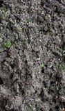 Dirt with moss Royalty Free Stock Photos