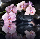 Wet spa pebbles and pink orchids Stock Images