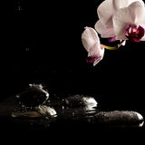 Wet Spa Stones with Beautiful Fresh Flower Stock Photography