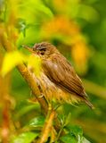 Wet Sparrow. Cool pic on rainy day stock photos