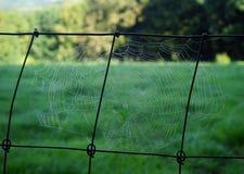 Wet spider net Stock Image