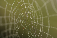 Wet Spider's Web Stock Image