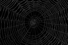 Wet Spider web on black. Dew collects on a spider web Stock Photography