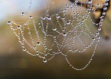 Wet spider web Stock Image