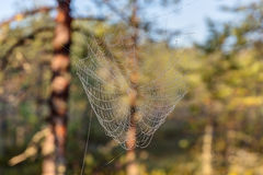 Wet spider web Royalty Free Stock Photos