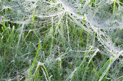 Wet spider web on grass Royalty Free Stock Image