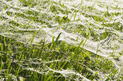 Wet spider web on grass Royalty Free Stock Photos