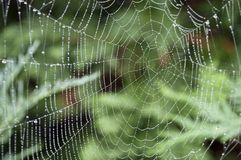 Wet spider-web Royalty Free Stock Photography