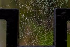 Wet spider web Stock Photo