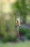 Wet Spider Web (vertical) Royalty Free Stock Photos