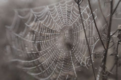 Wet spider web Royalty Free Stock Photography