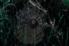 Wet spiderweb Stock Image