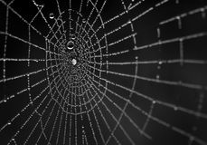 Wet spiderweb on a black background Royalty Free Stock Photography