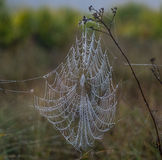 Wet Spiderweb on a Central Florida Hike Royalty Free Stock Photography