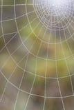 Wet spiderweb Stock Photos