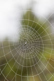 Wet spiderweb Stock Photo