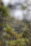 Wet spiderweb Stock Images