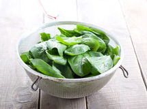 Wet spinach Stock Photos